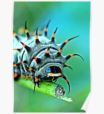 Close Up - Cairns birdwing caterpillar Poster