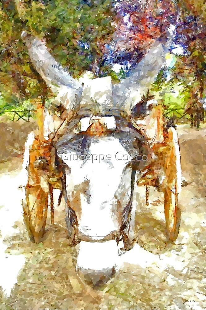Muzzle of donkey with sicilian cart by Giuseppe Cocco
