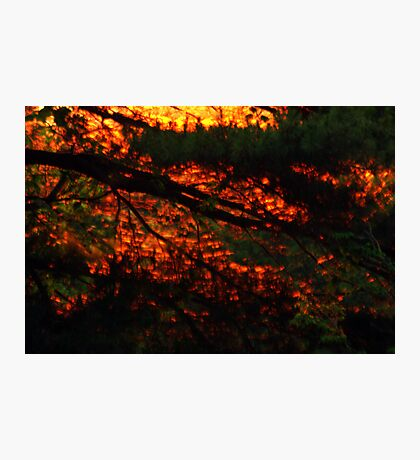 Light Within Photographic Print