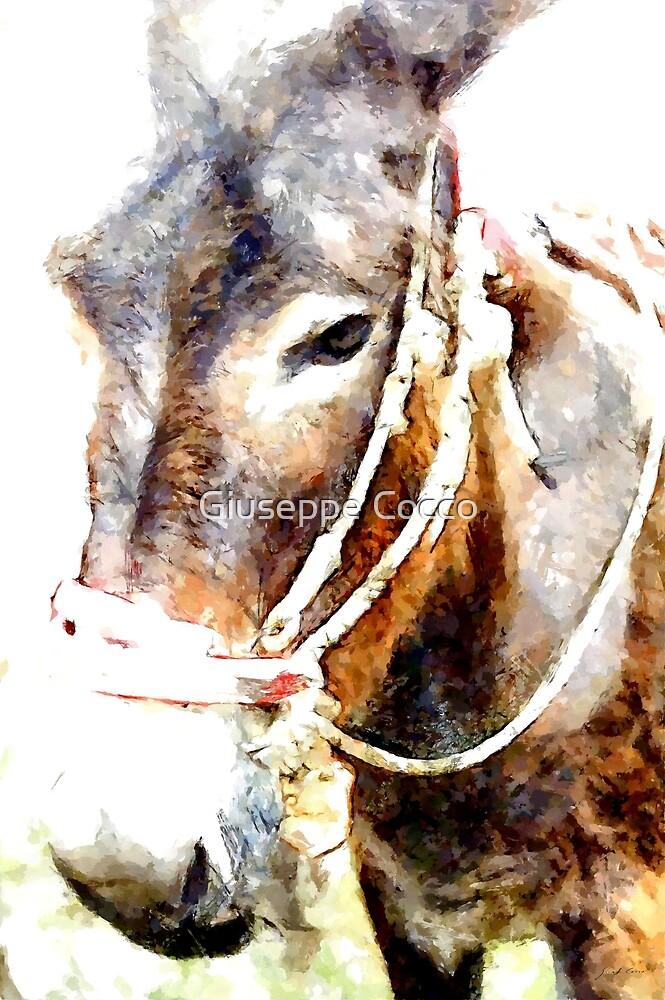 Muzzle of donkey by Giuseppe Cocco