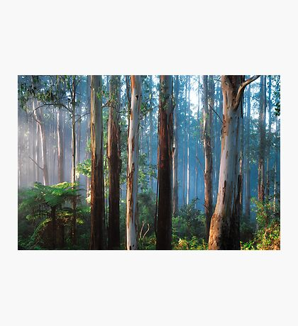 Sherbrooke Forest Photographic Print
