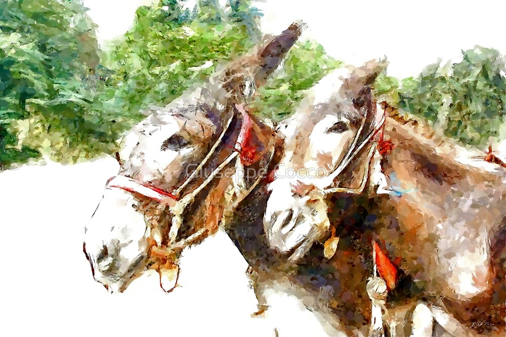 Muzzle of two donkeys by Giuseppe Cocco