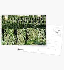 Groynes Postcards