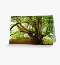 Sheringham Tree Greeting Card