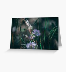 Pacific Crest Trail Wildflowers Greeting Card
