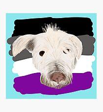 Pride Pets- Max Photographic Print
