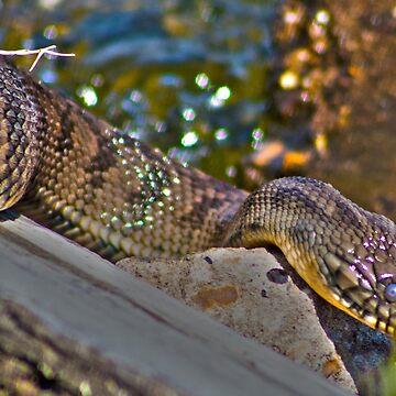 Water Snake by spookydooky