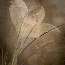 Painted Lily by Marsha Tudor