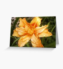 Double Daylily  Greeting Card