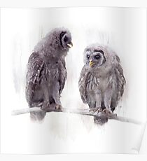Young Barred Owls Perched on a Branch,Watercolor painting Poster
