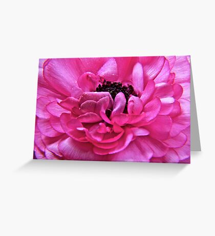 Pink Pedals Unfurling Greeting Card