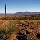 Kangaroo grass by David  Hibberd