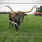 Texas Longhorn by Savannah Gibbs