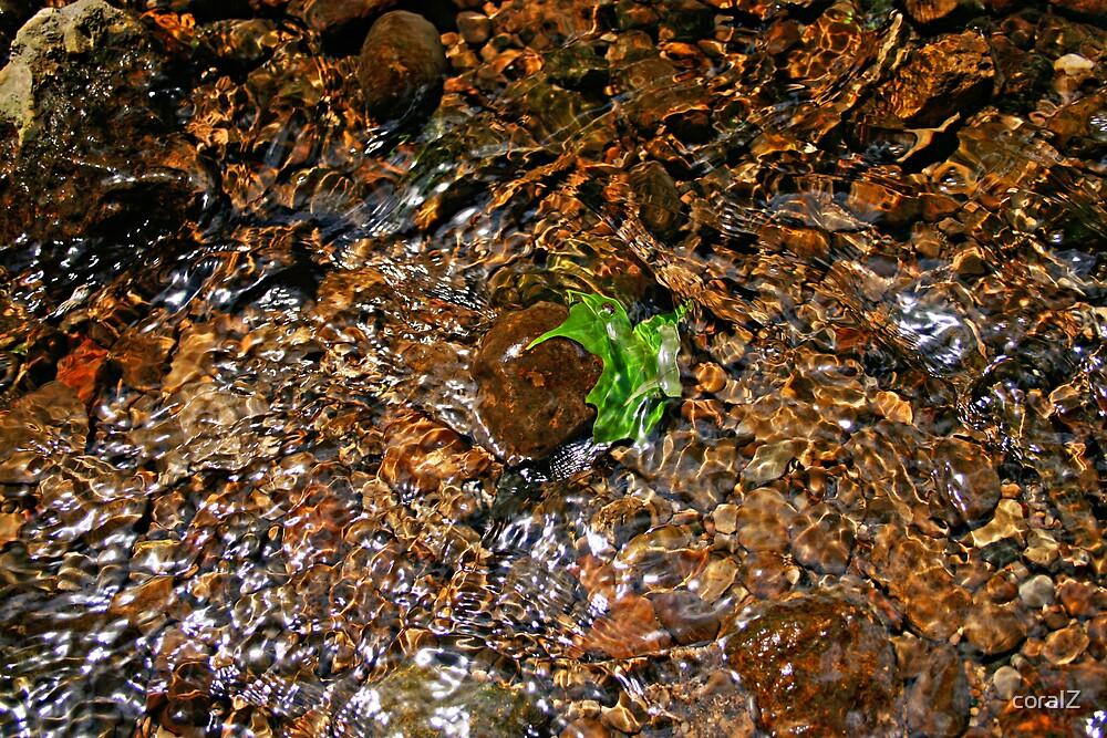 Green leaf by coralZ