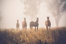 Misty Horses 1 by Candice O'Neill