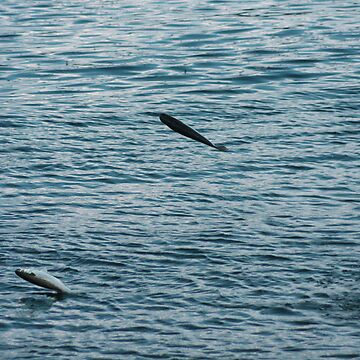 Jumping Fish by cutcat