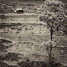 The Farmer - Nepal by Alan Robert Cooke