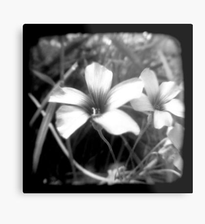 Oxalis - Through The Viewfinder Metal Print
