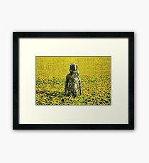 Stranded in the sunflower field Framed Print