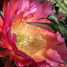 Hummer on Flying Saucer Trichocereus by Linda Gregory