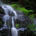 Moss Stones Tasmania by Angelika  Vogel