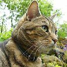 Feline Portrait by pat oubridge