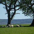 View Over The Valley by pat oubridge