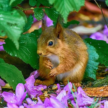 Red Squirrel - Cumbria by TheDabber