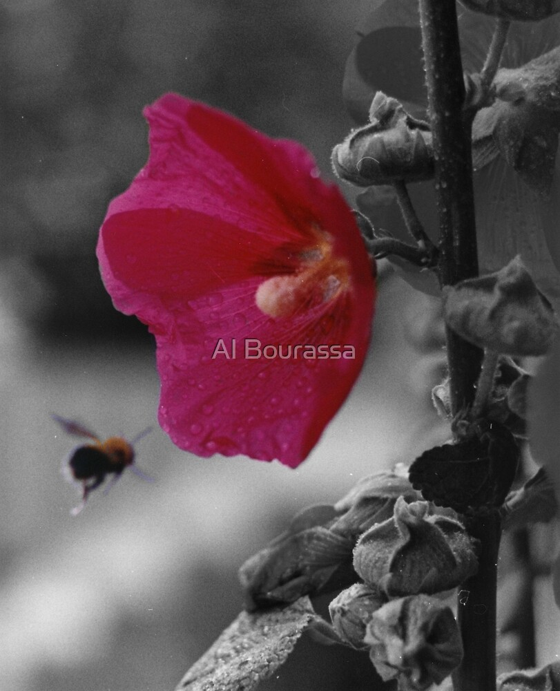The Pollinator by Al Bourassa
