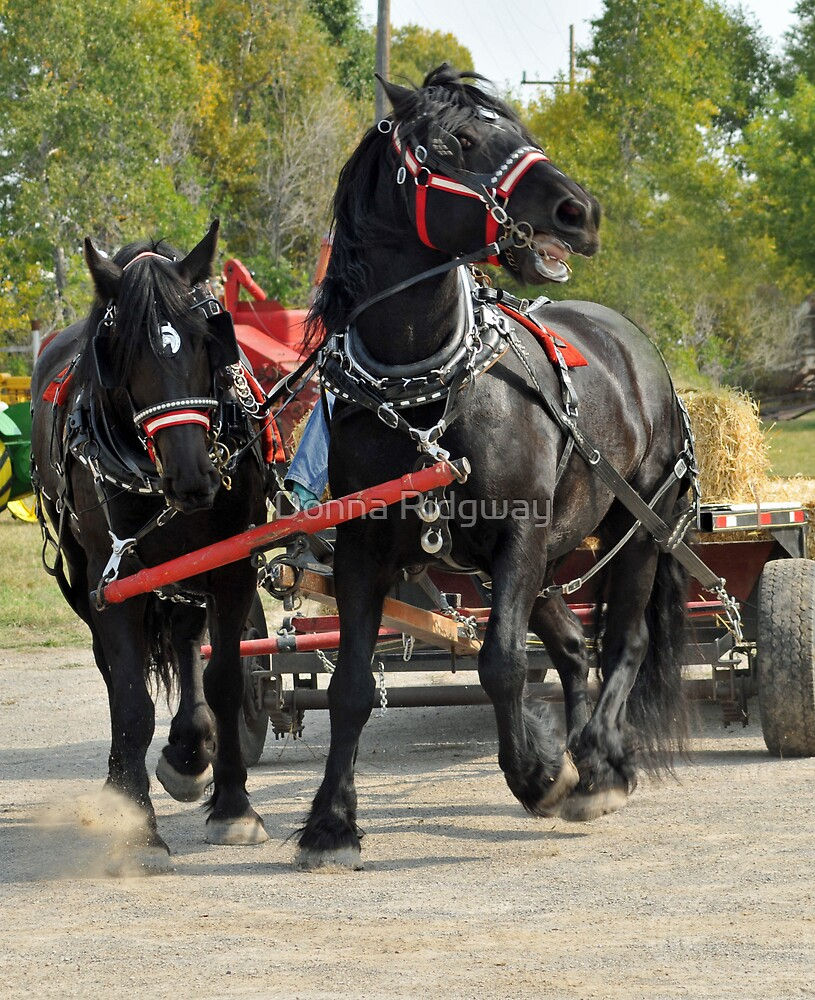 Percheron with a Problem by Donna Ridgway