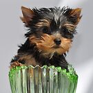 Green Glass Puppy by EventHorizon