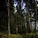 Dark Forest by Theresa Wall Duggan