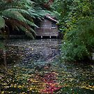 Shed of Autumn Colours by robertb