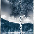 Silver birch by shore of Loch Leven by Richard Ion