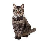 Cute Tabby Cat Wearing Bowtie by PixLifePhoto