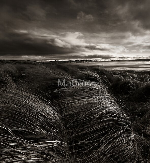 Longing, Dunnet Beach, Caithness, Scotland by Martina Cross