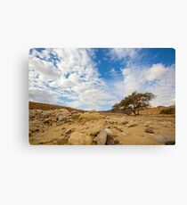 Enduring Acacia tree survives in the Desert Canvas Print