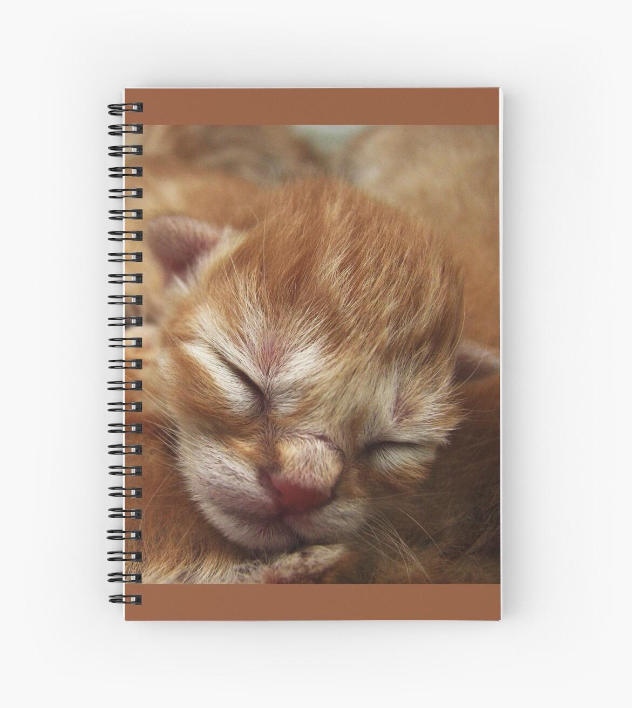 Newborn Kitten Sleeping by Andrielle