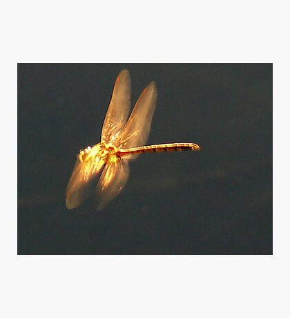 Dragonfly Gold Photographic Print
