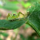 Teensy Weensy Spider  by May Lattanzio
