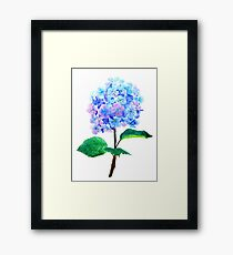 blue purple hydrangea Framed Print