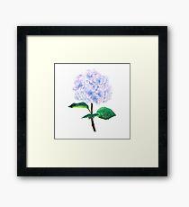 Lámina enmarcada hortensia rosa púrpura azul