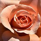 Peach Rose-The Inside Story by Len Bomba