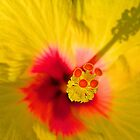 Yellow Hibiscus by TeAnne