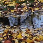 Autumn Puddles by Lozzar Landscape