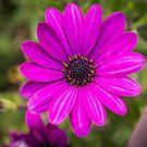 Beautiful Pink Flower by Sunil Bhardwaj