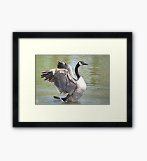 Wing Flapping Framed Print
