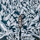 Aerial of an Ice breaker on its way through arctic ice - Landscape Photography by Michael Schauer
