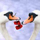 Swans Valentine by Paul Clifford Bannister