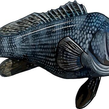 Black Sea Bass | Rock Bass by blueshore